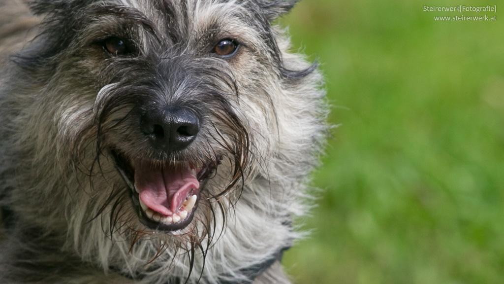 Tipps zur Zahnpflege von Hunden