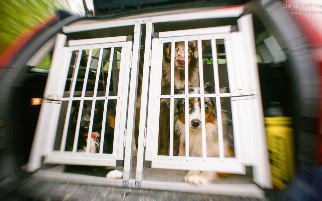 Hundetransportbox aus Alu für mehr Sicherheit